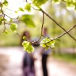 Portrait of  couple through the branches in a summer park — Stock Photo