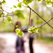 Portrait of couple through the branches in a summer park — Stock Photo #24741803