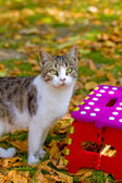 Cat and colorful stool in autumn park — Stock Photo