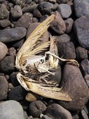 Dead Bird Skeleton, Lanzarote — Stock Photo