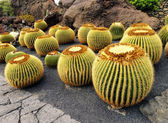 Jardin de Cactus, Lanzarote, Canary Islands, Spain — Stock Photo