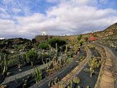 Jardin de cactus, lanzarote, kanárské ostrovy, španělsko — Stock fotografie