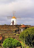Jardin de Cactus, Lanzarote, Canary Islands, Spain — Stock Photo