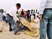 Preparing Gofio, Mancha Blanca, Lanzarote — Stock Photo