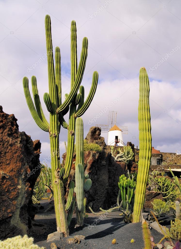 Jardin de cactus lanzarote canary islands spain stock for Jardineras de cactus