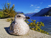 Mew, Como, Lombardy, Italy — Stock Photo