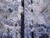 Winter Forest, Tatra Mountains, Poland — Stock Photo