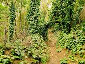 Los Tilos Forest, La Palma — Stock Photo