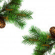 Branch of Christmas tree on white — Stock Photo #1415077
