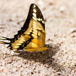 Beautiful butterfly on stone and sand - Stock Photo