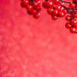 European holly on red background (shallow DOF) - Stockfoto
