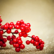 European holly on golden background (shallow DOF) - Stok fotoğraf