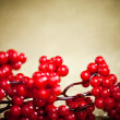 European holly on golden background (shallow DOF) - Stock Photo