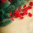 European holly and fir-tree on golden background, shallow DOF - Stockfoto