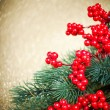 European holly and fir-tree on golden background, shallow DOF  — Stockfoto