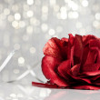 Red rose with festive background - Stockfoto