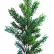 Branch of Christmas tree on white — Foto de stock #16968353