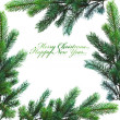 Branch of Christmas tree on white — Stock Photo #16968361