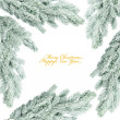 Branch of Christmas tree on white — Stock Photo #16968379