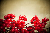 European holly on golden background (shallow DOF) — 图库照片