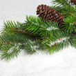 Branch of Christmas tree with pinecone — Stock Photo #17138985