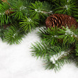 Branch of Christmas tree with pinecone - Stok fotoraf