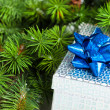 Branch of Christmas tree with gift box - Stockfoto