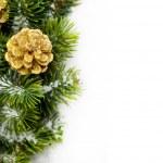 松かさかとクリスマス ツリーの枝 — ストック写真
