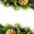 Branch of Christmas tree with pinecone — Стоковая фотография