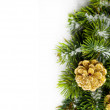 Branch of Christmas tree with pinecone — 图库照片