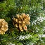 Филиал елки с Сосновая шишка — Стоковое фото