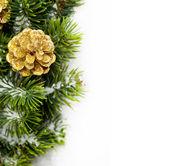 Ramo da árvore de natal com pinha — Foto Stock