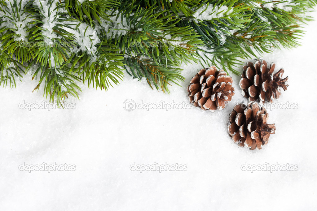 Branch of Christmas tree with pinecone  Stock Photo #17139043