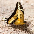 Royalty-Free Stock Photo: Beautiful butterfly on stone and sand