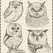 Vector set: birds - variety of vintage bird illustrations — Stok Vektör #14082156