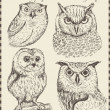 vector set: vogels - scala aan vintage vogel illustraties — Stockvector  #14082156