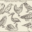 Vector set: birds - variety of vintage bird illustrations — Stok Vektör #14082161