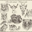 Vector set: different wild animals - various vintage style. — Vecteur #14089262