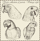 Vector set: birds - variety of vintage bird illustrations — Stock Vector