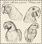 Vector set: birds - variety of vintage bird illustrations — Stock Vector