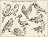 Vector set: birds - variety of vintage bird illustrations — Stok Vektör