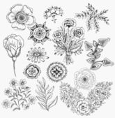 Set flowers hand drawn vector background elements — Stock Vector