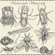 Stock vektor: Vector set insects in vintage style