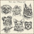 Set Dog in vintage style. Hand drawn vector — Vector de stock #16240631