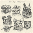 Set Dog in vintage style. Hand drawn vector — Vecteur #16240631
