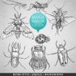 Vector set insects in vintage style — Vector de stock #16240939