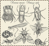 Vector conjunto insectos en estilo vintage — Vector de stock