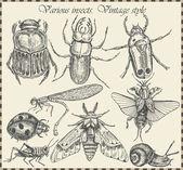 Vettore imposta insetti in stile vintage — Vettoriale Stock