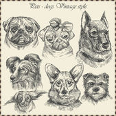 Set Dog in vintage style. Hand drawn vector — Vecteur