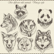 Vector set: different wild animals - various vintage style. — Stok Vektör #16254003